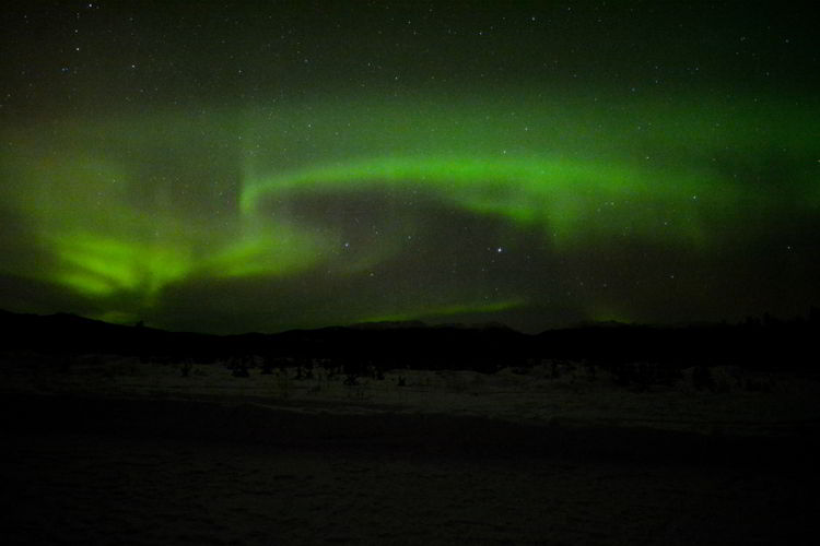 An image of the northern lights in the sky near Whitehorse, Yukon.