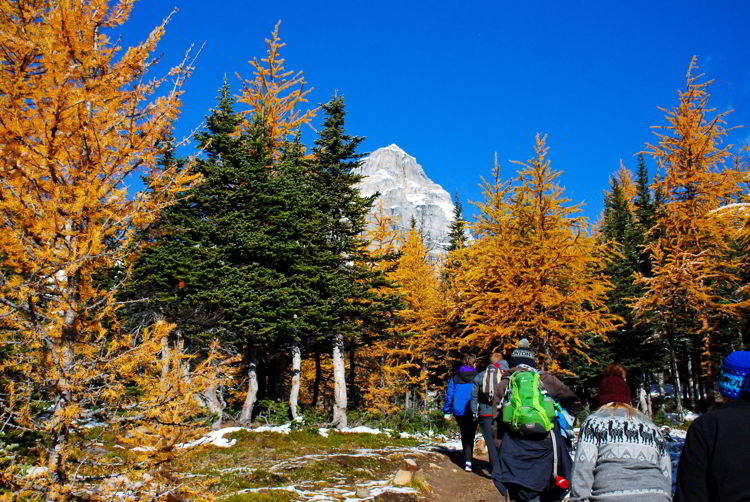 An image of a group of people on the Larch Valley hike in Banff National Park Alberta in autumn.