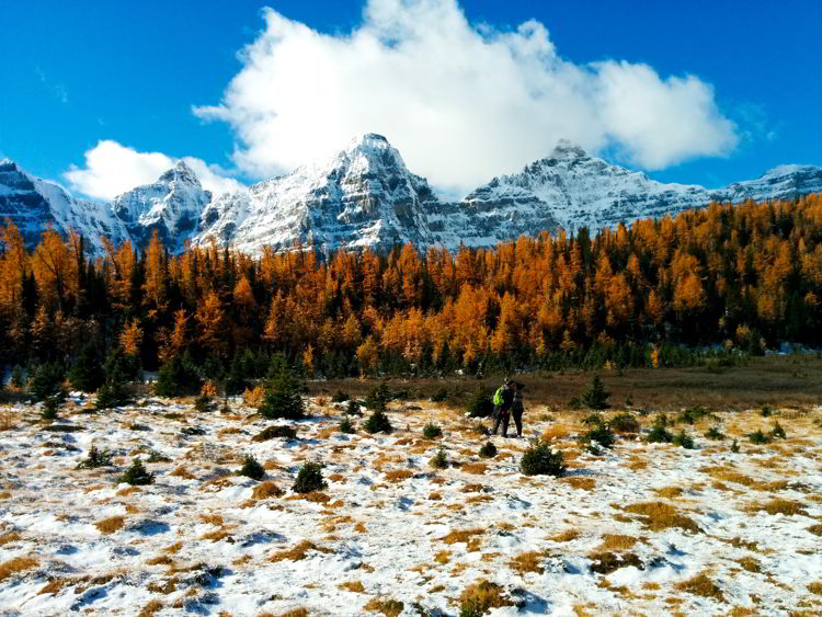 An image of larch hiking in the Canadian Rockies in Alberta, Canada near Lake Louise.