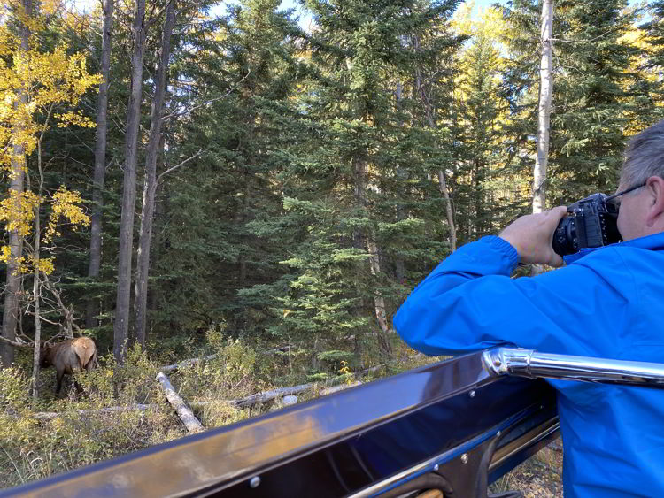 An image of a man photographing a bull elk from inside a jammer bus with Sundog Tours in Jasper National Park in Alberta, Canada.
