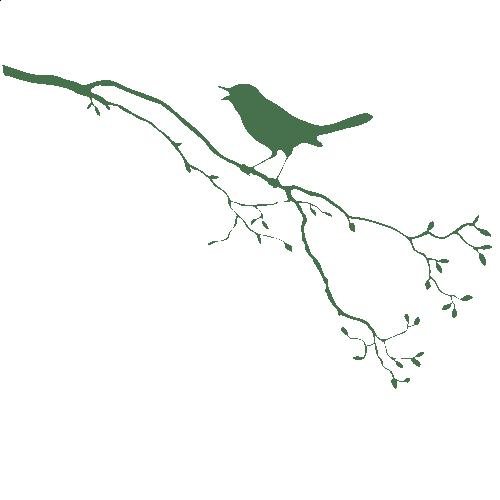WANDKINGS Wandtattoo Singvogel auf Ast Vogel Gre  Farbe whlbar  eBay