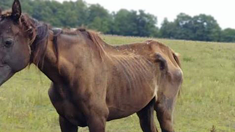 Howe horse_281719