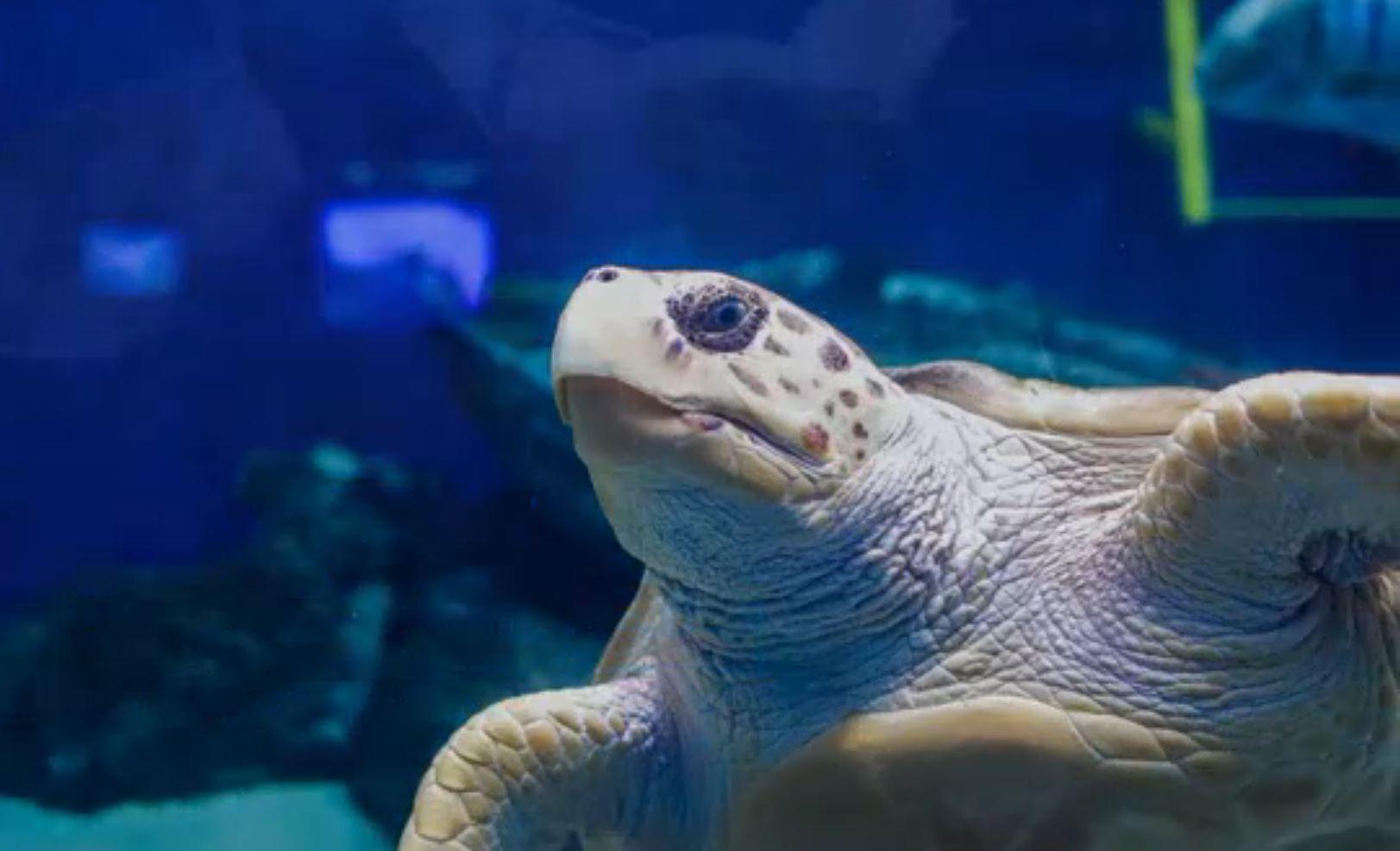 Birth Aquarium sea turtle_300492