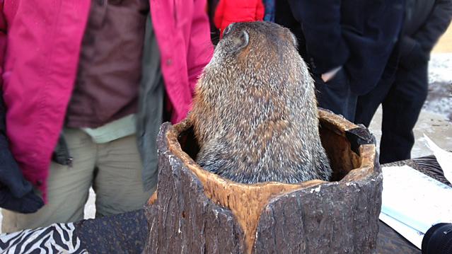 groundhog_311082