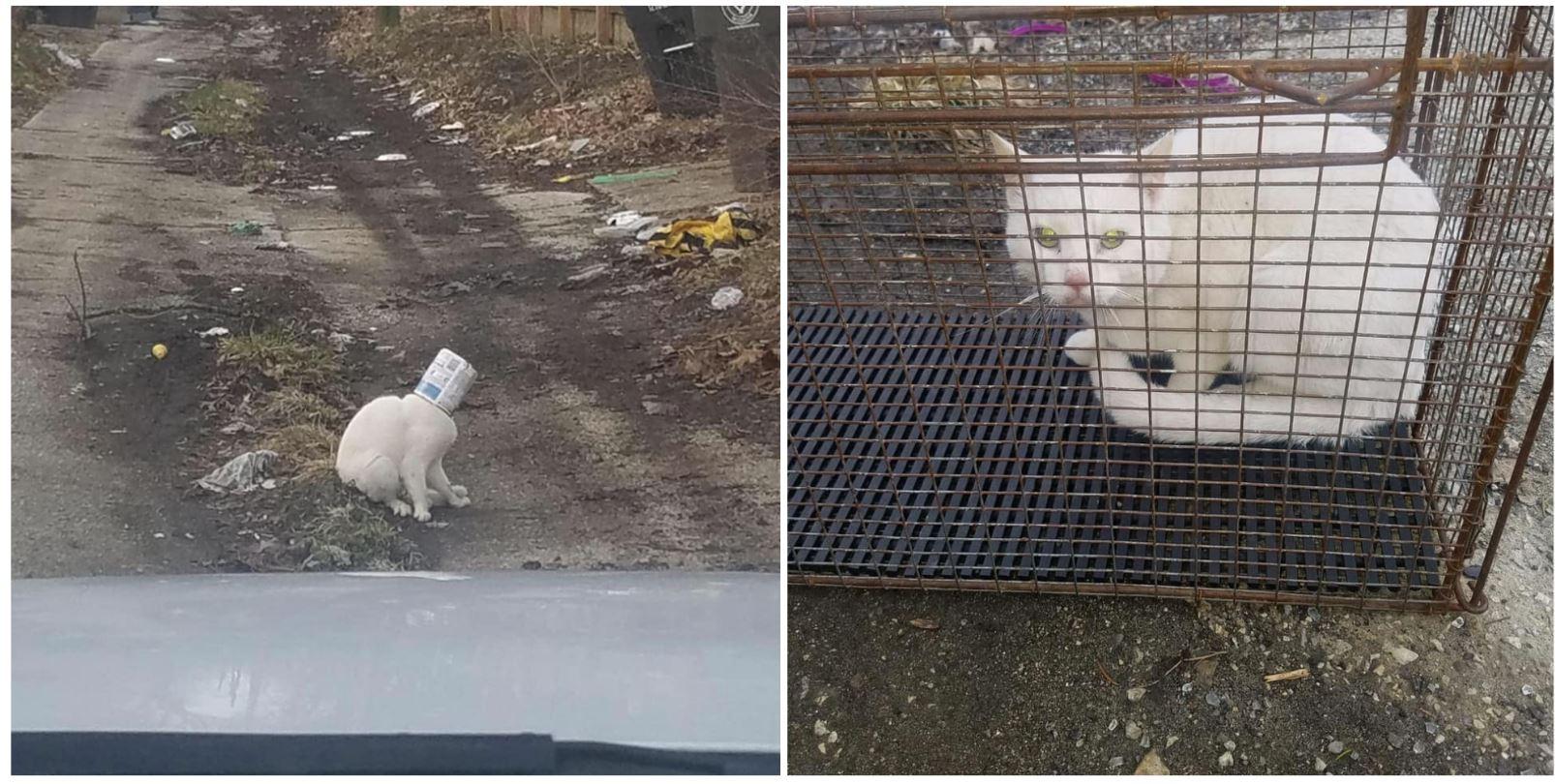 Cat stuck in can