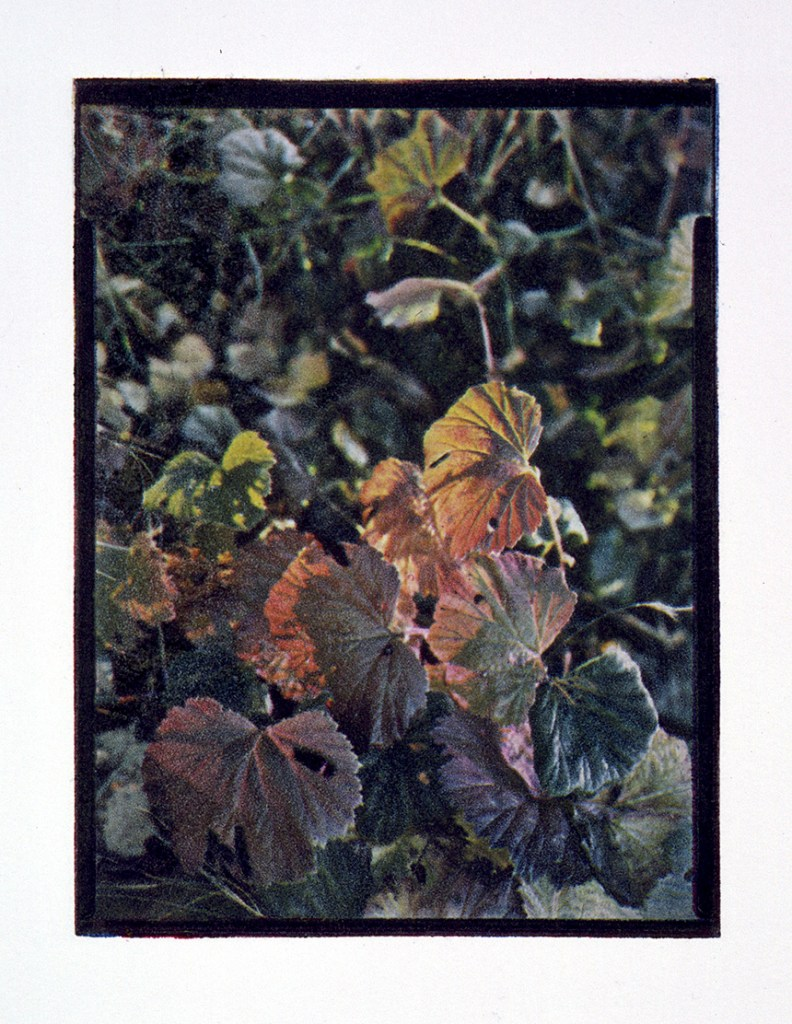 Autumn leafs, fotogravyr i fyrfärgstryck, 9x12 cm. ©Maria Wangi Ibohm, Maria Backström