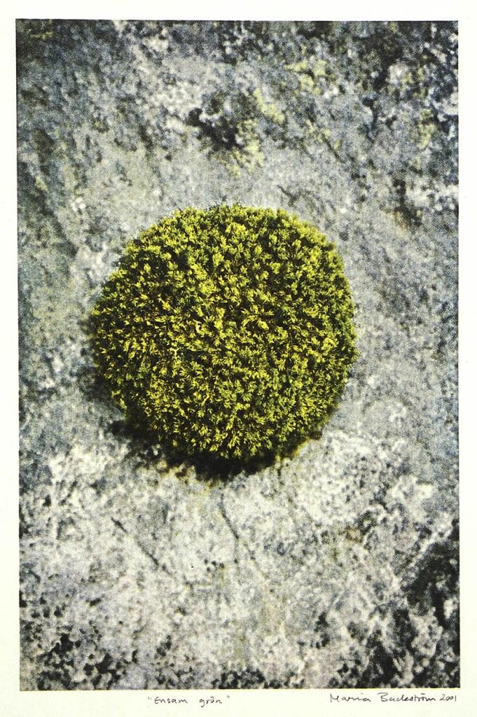 Ensam grön, serigrafi tryckt i en upplaga på 7 exemplar. Tryckt med växtfärg från Grafikens Hus växtfärgsträdgård. ©Maria Wangi Ibohm, Maria Backström