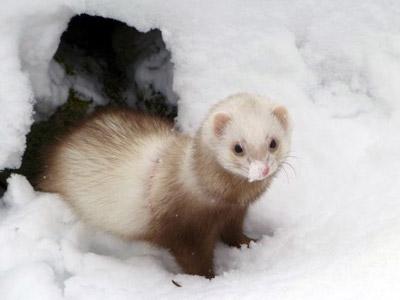 Vos animaux dans la neige