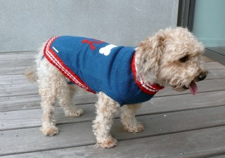 habit pour chien