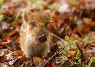 questionnaire animaux forêt
