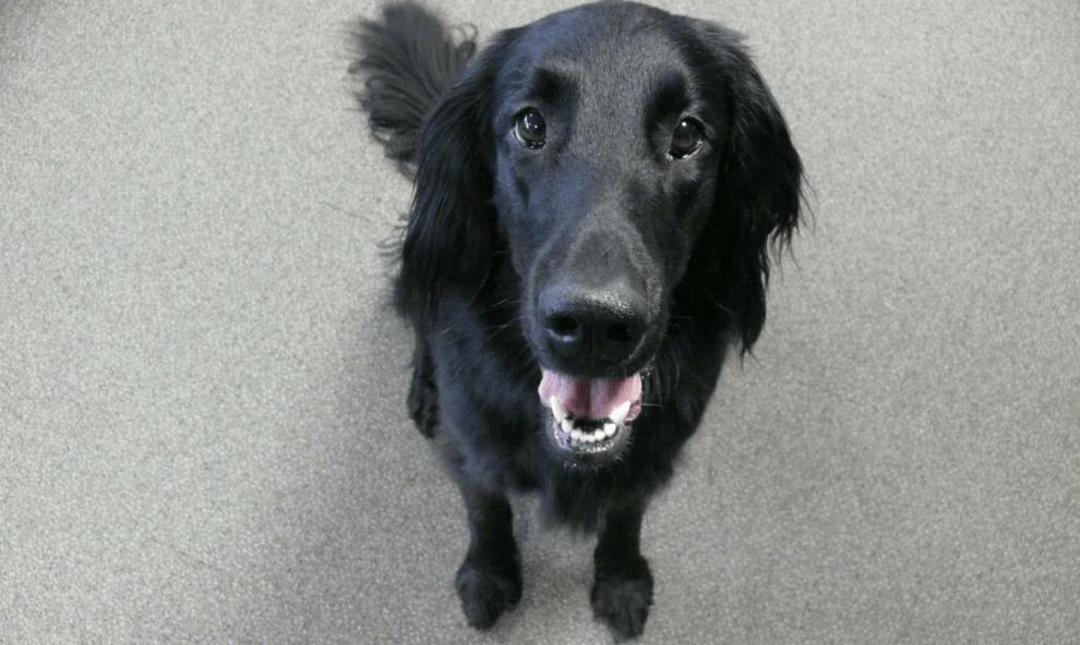 Jeu d'éducation pour chien