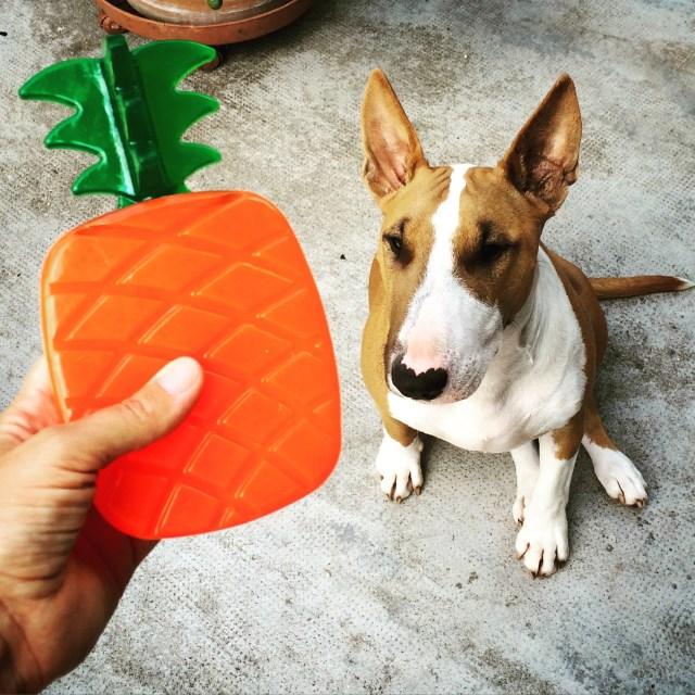 Test du jouet Ananas Biosafe