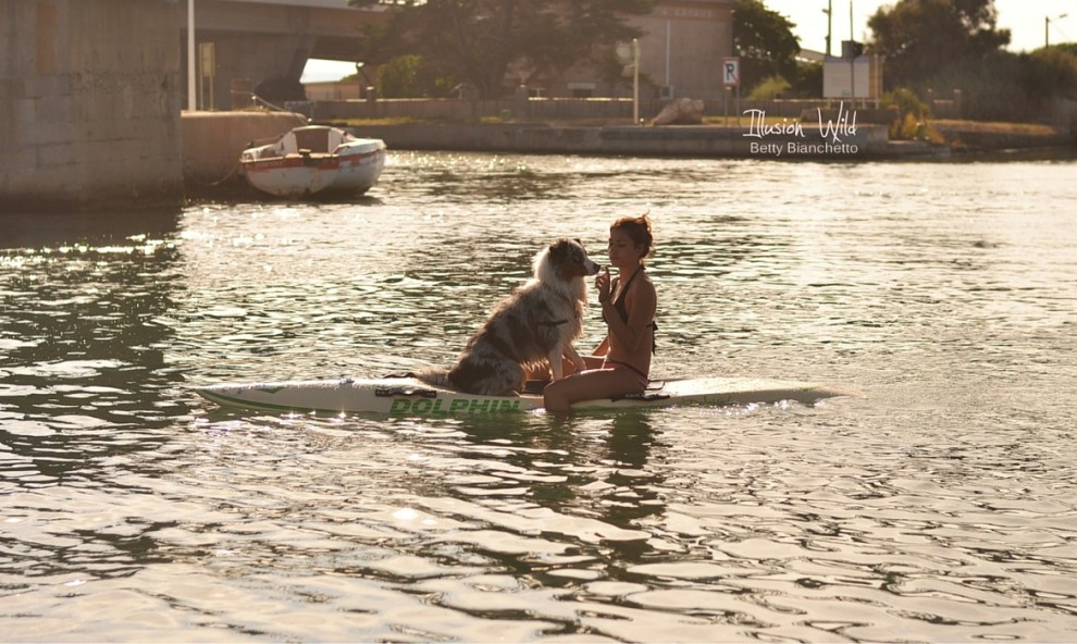 Sport canin : paddle board