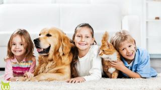 adoption animaux