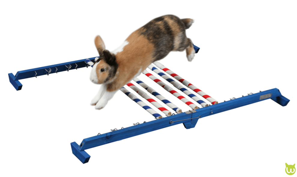 obstacle kaninhop