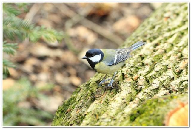 oiseau des jardins
