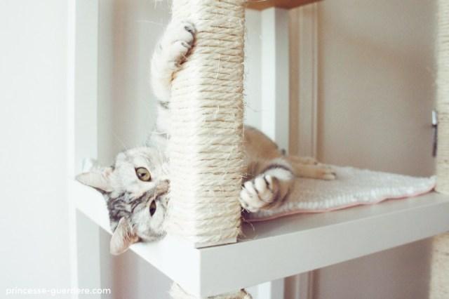 arbre à chat maison