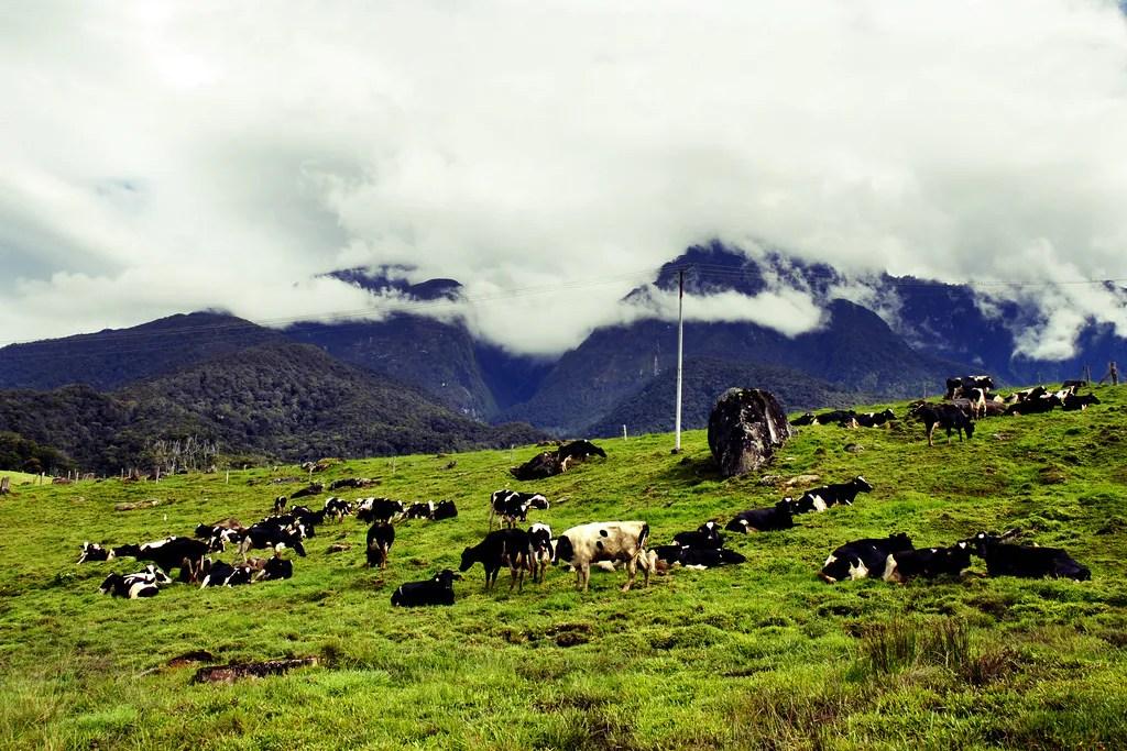 [ Kembara ] Keunikan Kundasang Seperti New Zealand