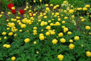 overvloed aan geel-rood-oranje