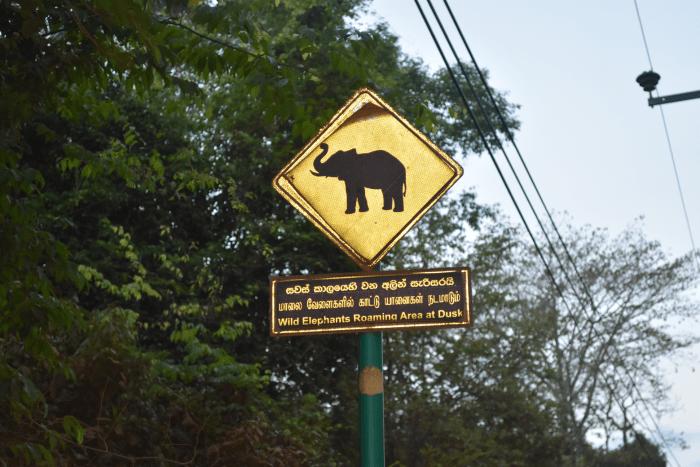 Olifant polunaruwa Sri Lanka