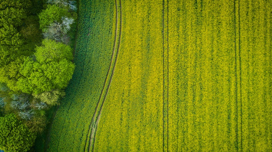 aerial view of a field