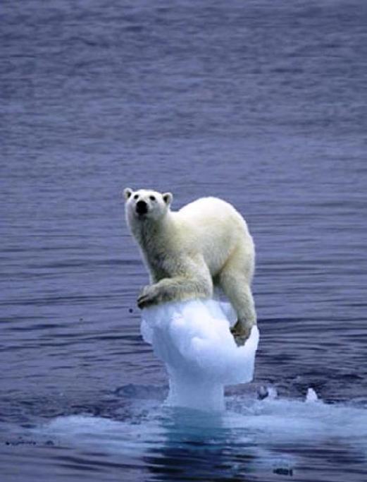 Een van de meest gebruikte plaatjes mbt Global Warming.. Maar dat woord is vervangen door 'Climate Change'.. Maar volgens Hans Labohm kan die verandering wel eens een nieuwe kleine ijstijd betekenen..!