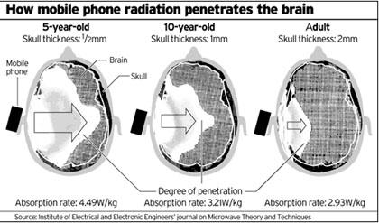 Vergelijking van het absorptieniveau van EMS (electro magnetische straling) in schedels van jongeren en volwassenen.
