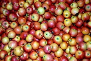 apple cider vinegar4