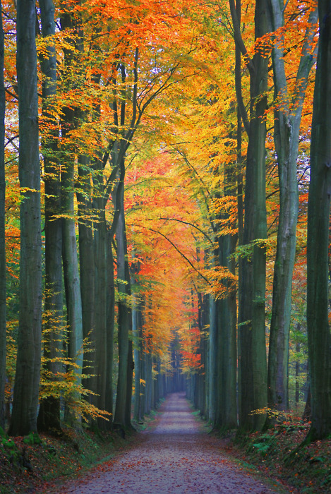 autumn lane with trees