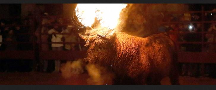 bull lightning festival