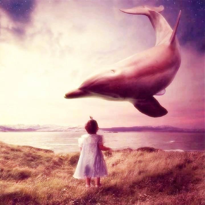 child dolphin