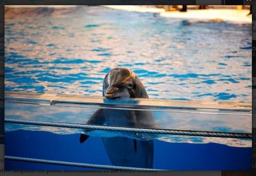 dolfijn in gevangenschap
