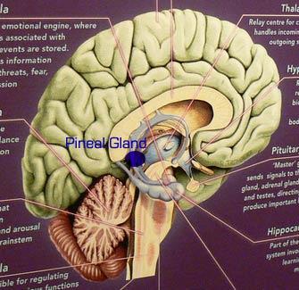 Diep in de hersenen opgeborgen, de menselijke kosmische antenne, de pijnappelklier.