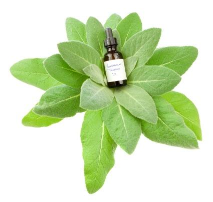 homeopathie plantblad