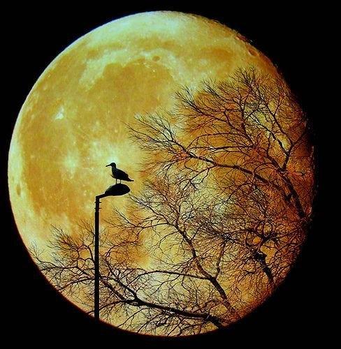 De maan staat niet voor niets symbool voor het (collectief) onbewuste.