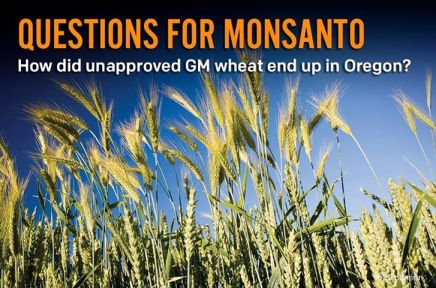 monsanto question