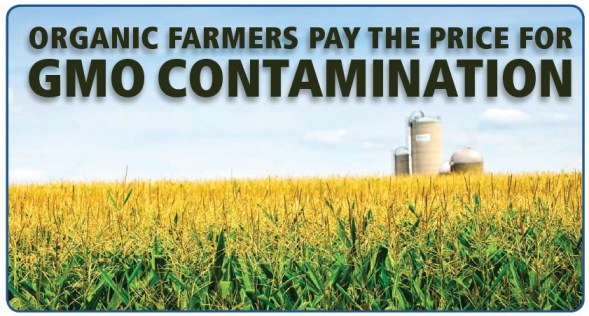 organic farmers pay the price