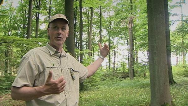 De Duitse boswachter Peter Wohlleben baarde opzien met een boek over 'menselijke bomen'..