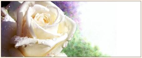 roos van wij worden wakker