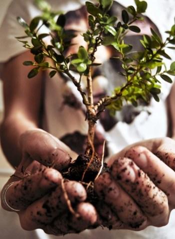 Het is de natuur om ons heen die ons laat zien hoe veerkrachtig het Leven is..!