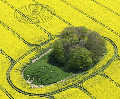 the-ridgeway-nr-avebury-wiltshire-reported-14th-april