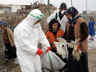 De vogelgriep die de wereld in 2005 in de ban had, ontketende veel dierenleed overal in de wereld. Hier een man-met-witte-jas in Turkeije.