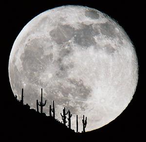volle maan cactus