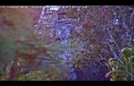 Mattercam – LIVE DISNEYLAND Webcam from Howard Johnson Hotel Anaheim