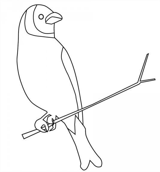 Coloriage d'un oiseau sur une branche d'arbre à imprimer