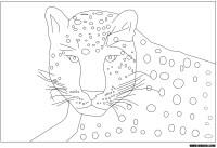 Panthre : Coloriage dune Panthre  imprimer et colorier
