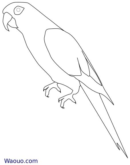 Perroquet : Coloriage d'un perroquet Ara gratuit à imprimer