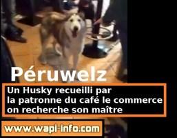 Péruwelz : on recherche le maître de ce Husky (+ vidéo)