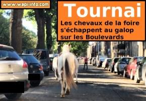 Insolite à Tournai : les chevaux de la foire s'échappent sur les boulevards