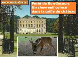 Forêt de Bonsecours: un chevreuil piégé par la grille du château